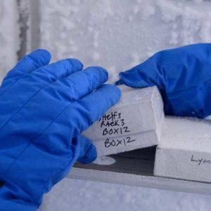 Lab Freezer Samples